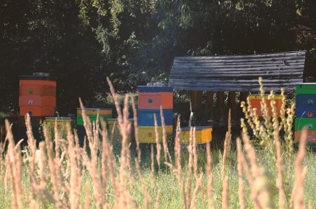 včelín na Včelej lúke